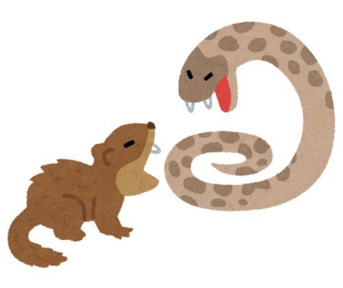 マングースはペットとして飼える?ハブの天敵なのに駆除される理由は?